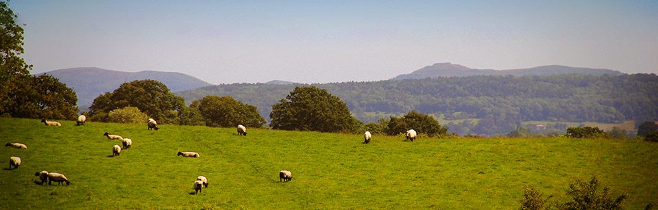 Malvern-Hills-with-sheep